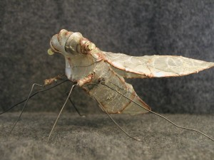 bug-left