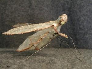 bug-side