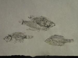trio-2-fish