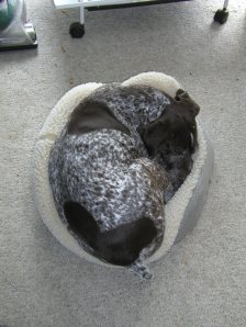 mo in catbed 2006