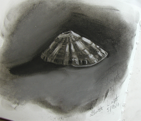 Keyhole Limpet in charcoal. 18 May 2013. Gale Everett