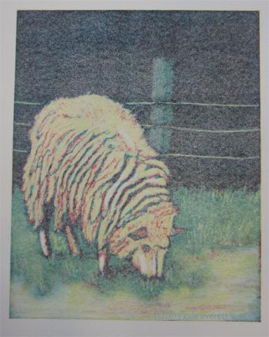 Ghost print of sheep.