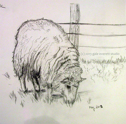 sheep-sketch1