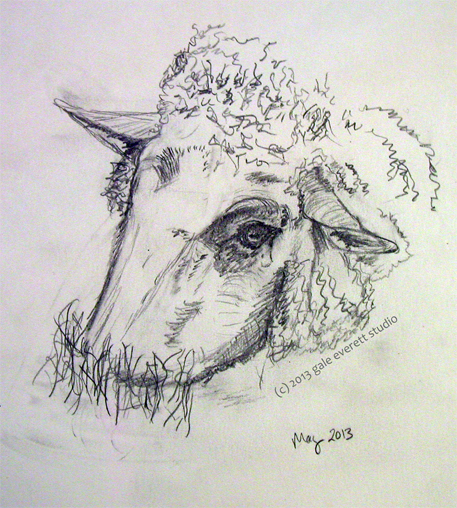 sheep-sketch2