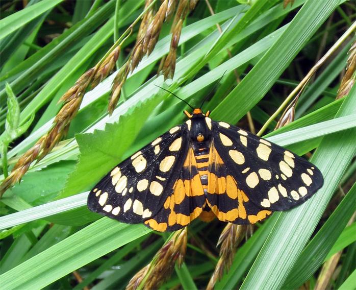 butterfly1_geverett