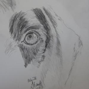 moby eye4