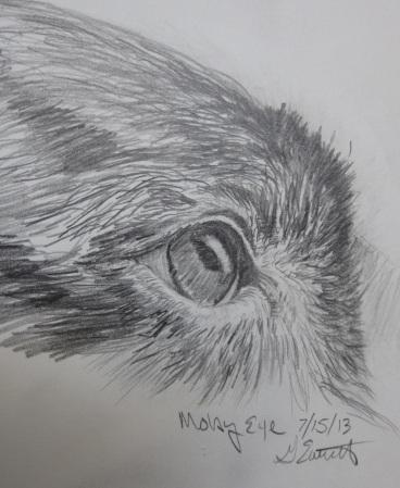 Moby's Eye