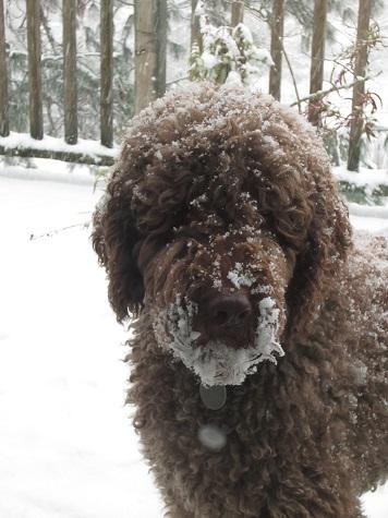 snow5zeek