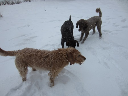 feb snow2