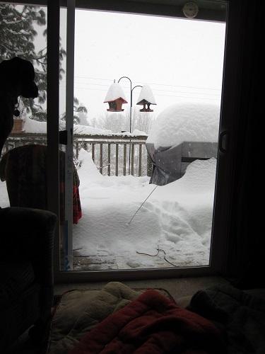 livingroom view of snow