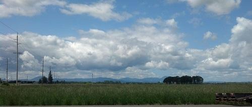 field west halsey