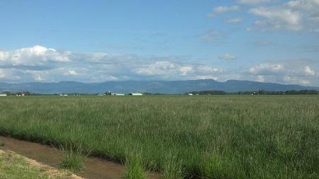 fields east