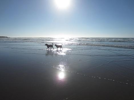 yachats beach2