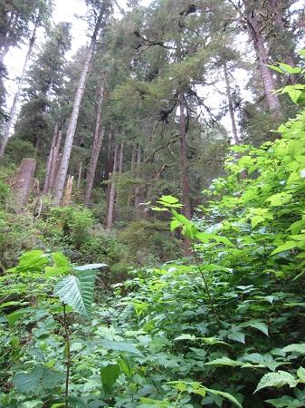 forest_coastal