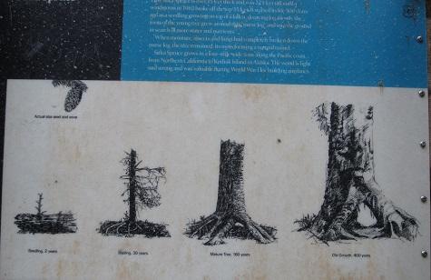 sitka spruce sign