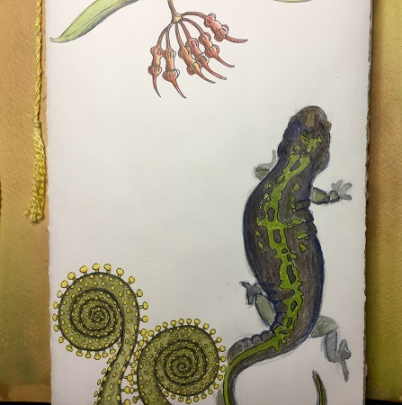 salamander2_galeeverett