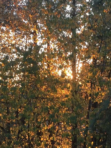 nov 26 sunlight
