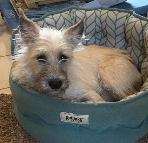 Bed dog_galeeverett