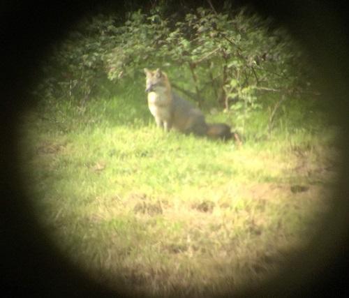 fox1_april132016