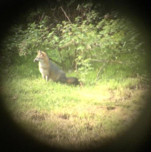 fox2_13april2016