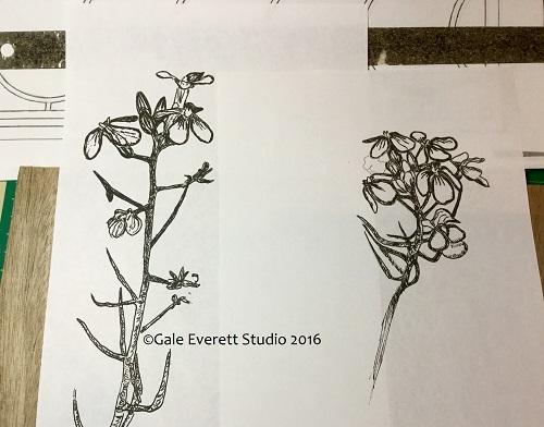 radish drawing_geverett