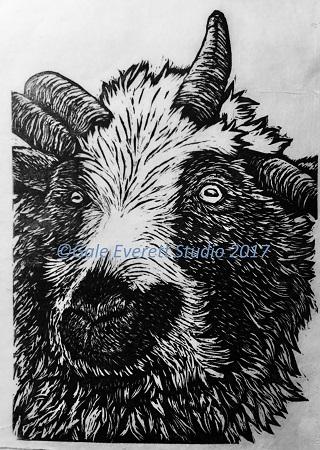 Jacobs_Sheep_geverettstudio