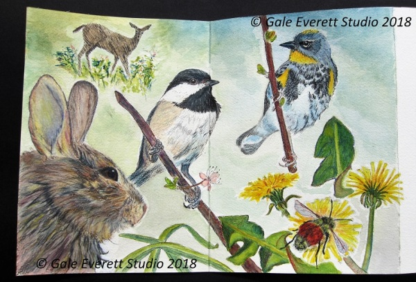 Backyard Wildlife Page_geverettstudio2018