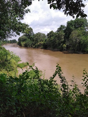 Royal Mara River
