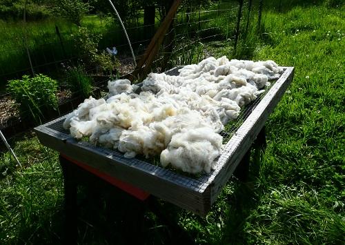 fermenting wool_geverettstudio