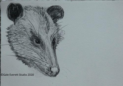 Opossum_geverettstudio