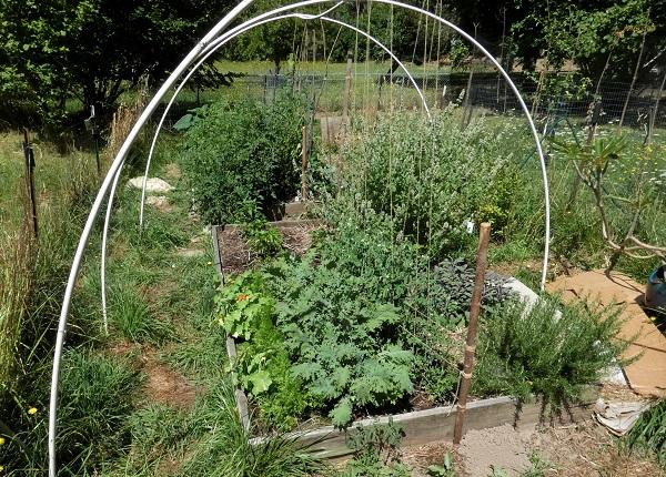 garden july 31 2020_geverttstudio