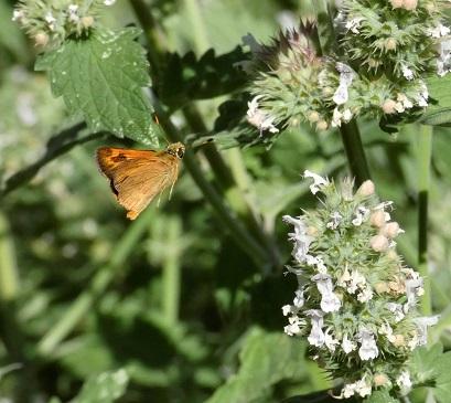 butterfly in flight_geverettstudio