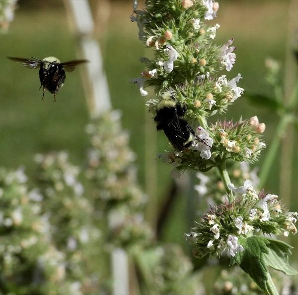 flight of the bumblebee_geverettstudio2020