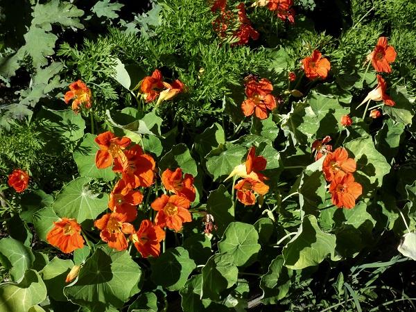 orange flower power_geverettstudio